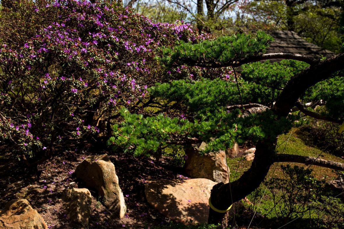 Botanická zahrada v pražské Tróji otevírá své brány