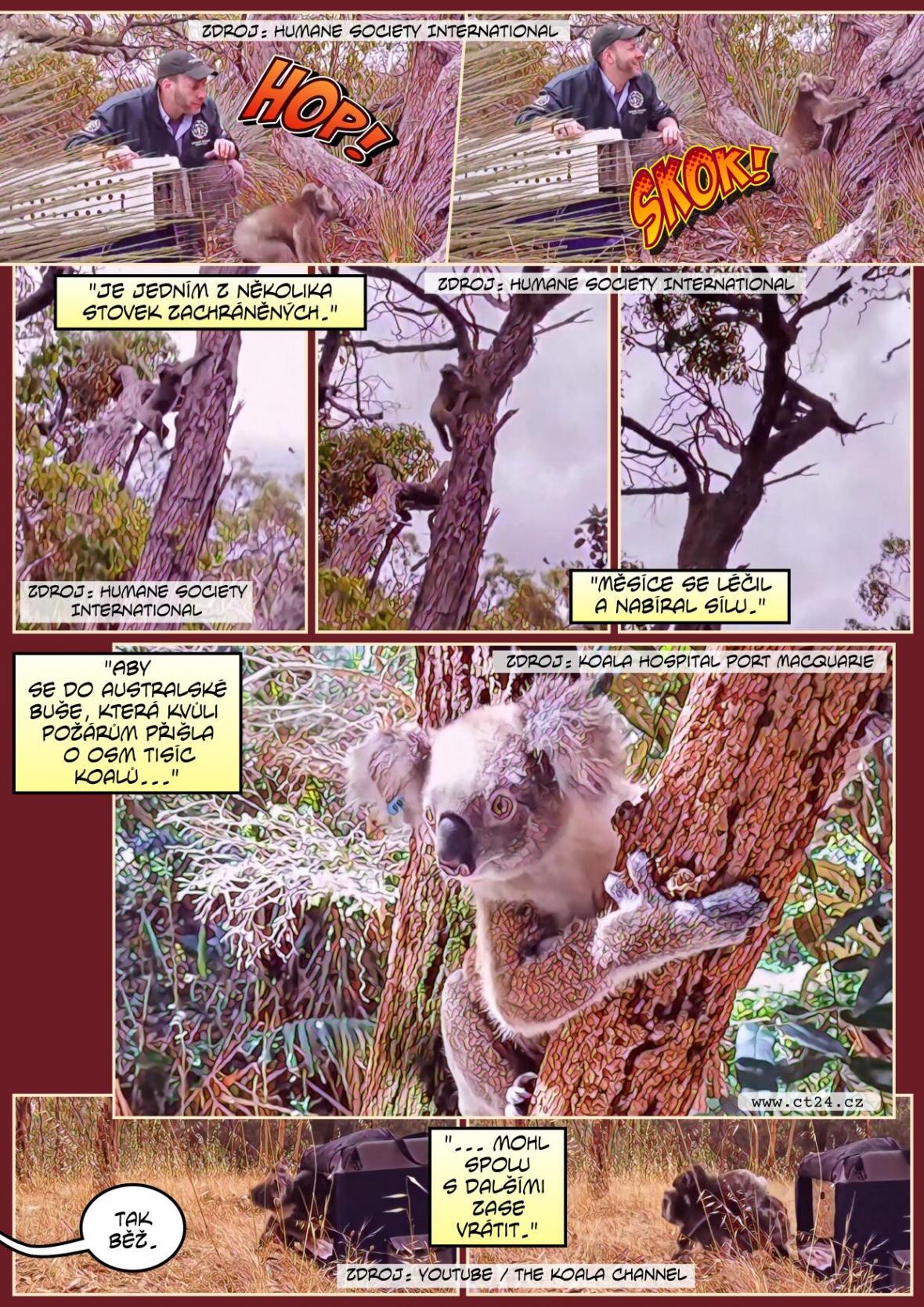 Po pekle přichází obnova. Do australské přírody se opět vrací zvířata