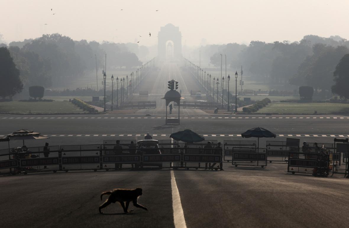 Ztichlá města lákají zvěř