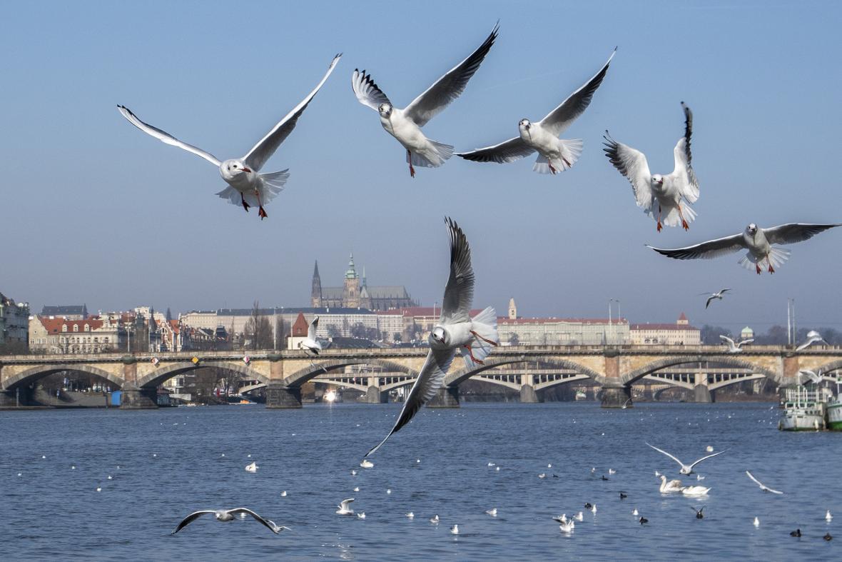 Vítězné fotografie Czech Nature Photo 2020