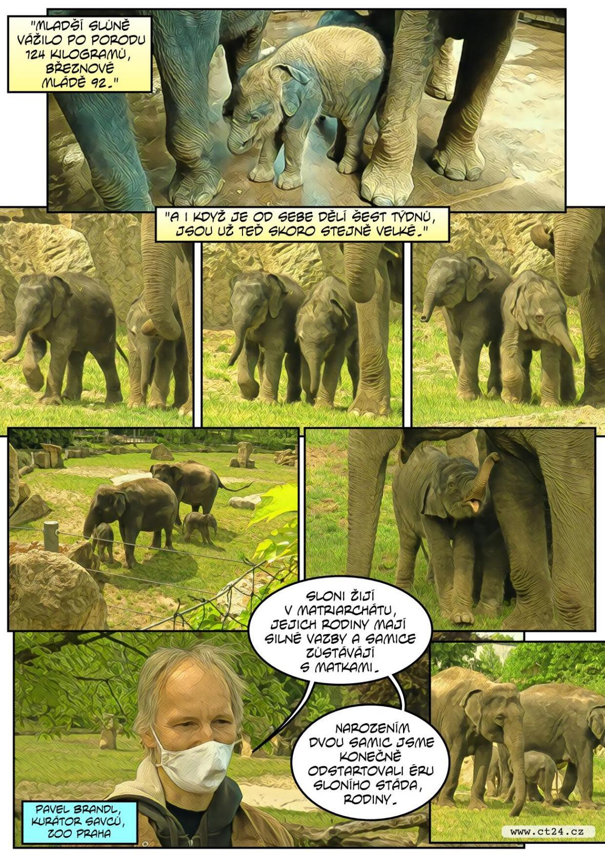 Pražská zoo ukázala druhé slůně