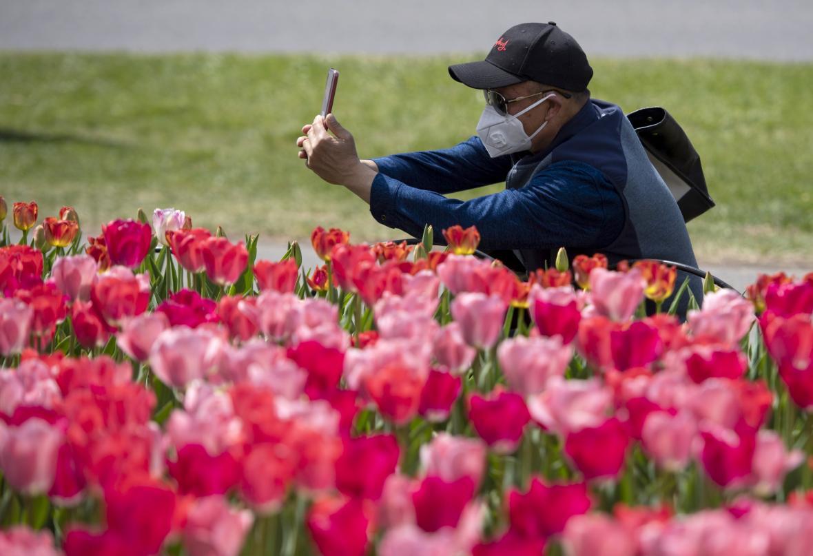 Kanadský festival tulipánů