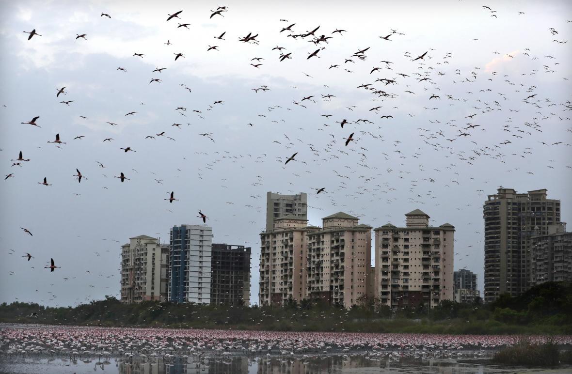Město Bombaj překvapil přílet tisíců plameňáků