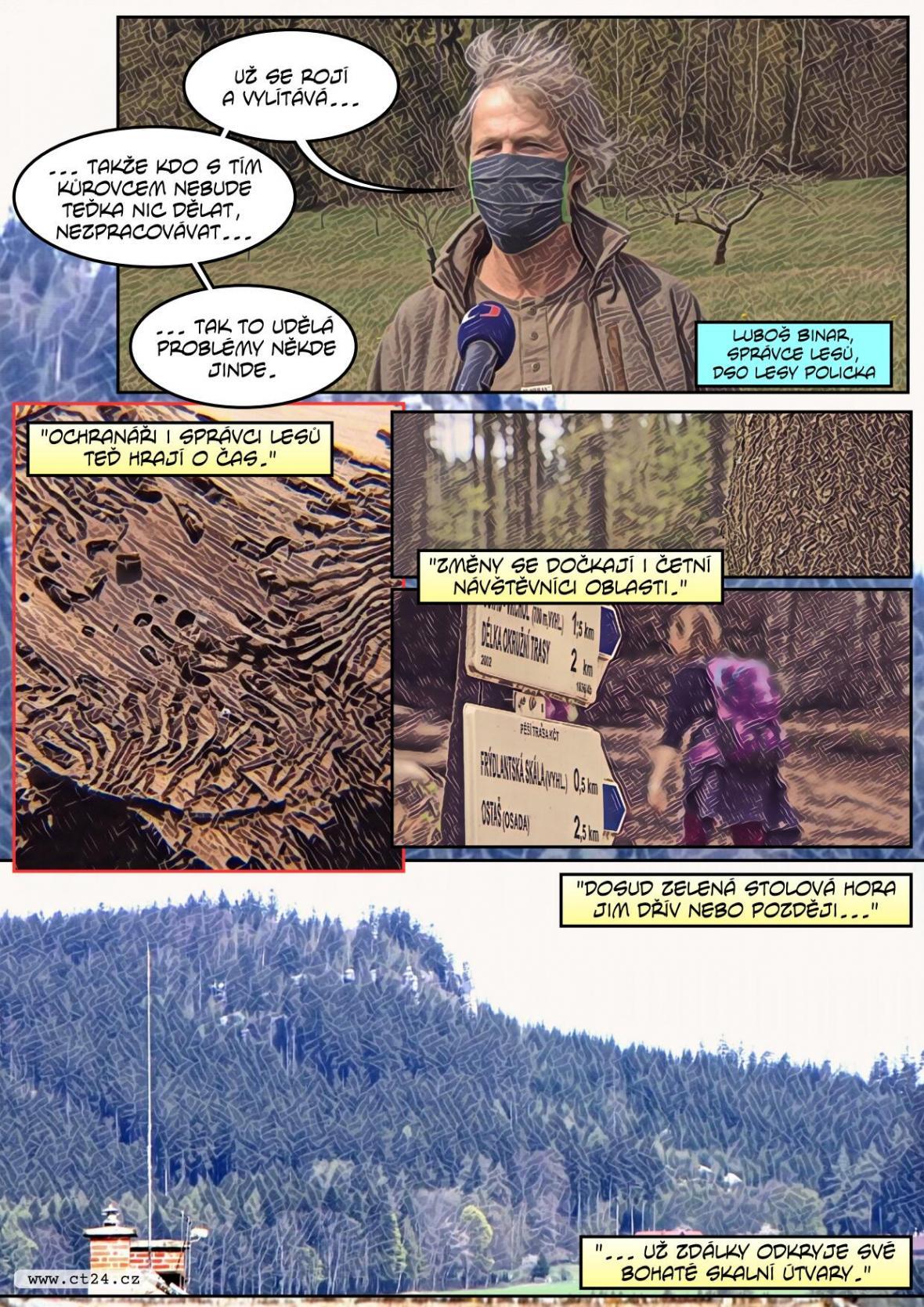 Kvůli sokolům se nekácí les