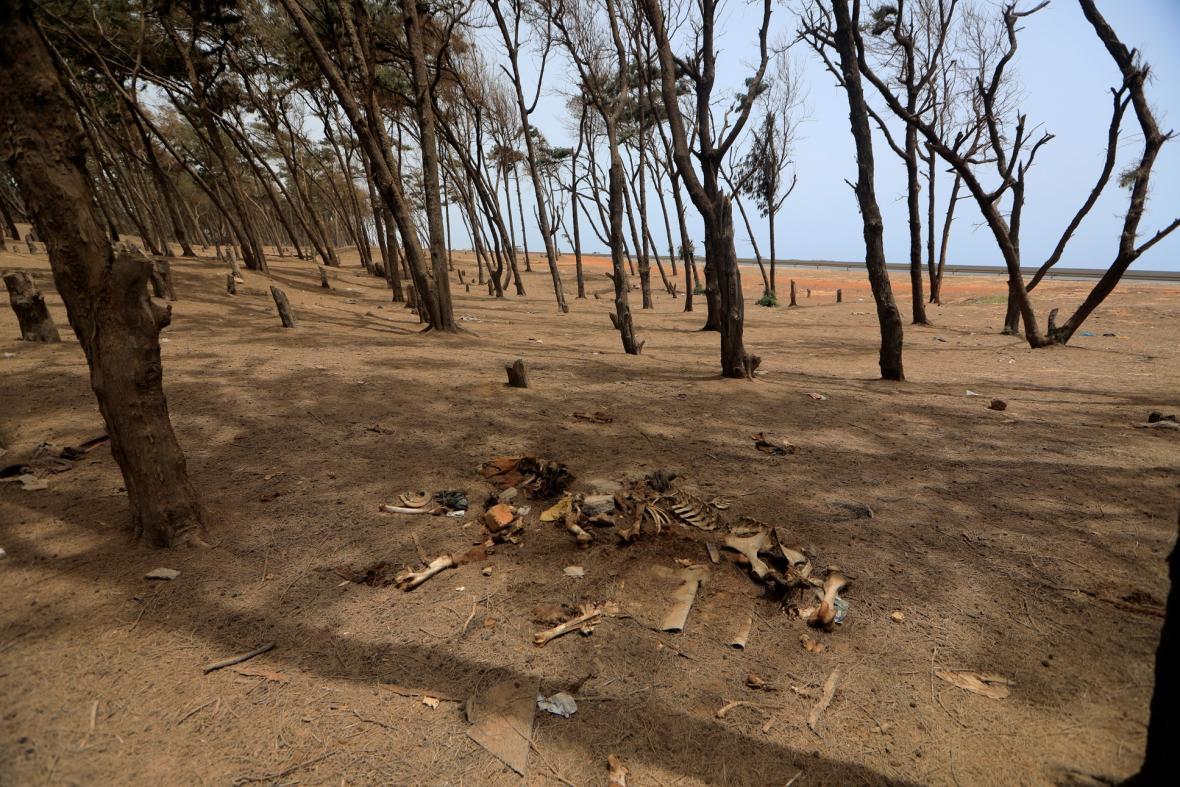 Záchrana lesů v Dakaru
