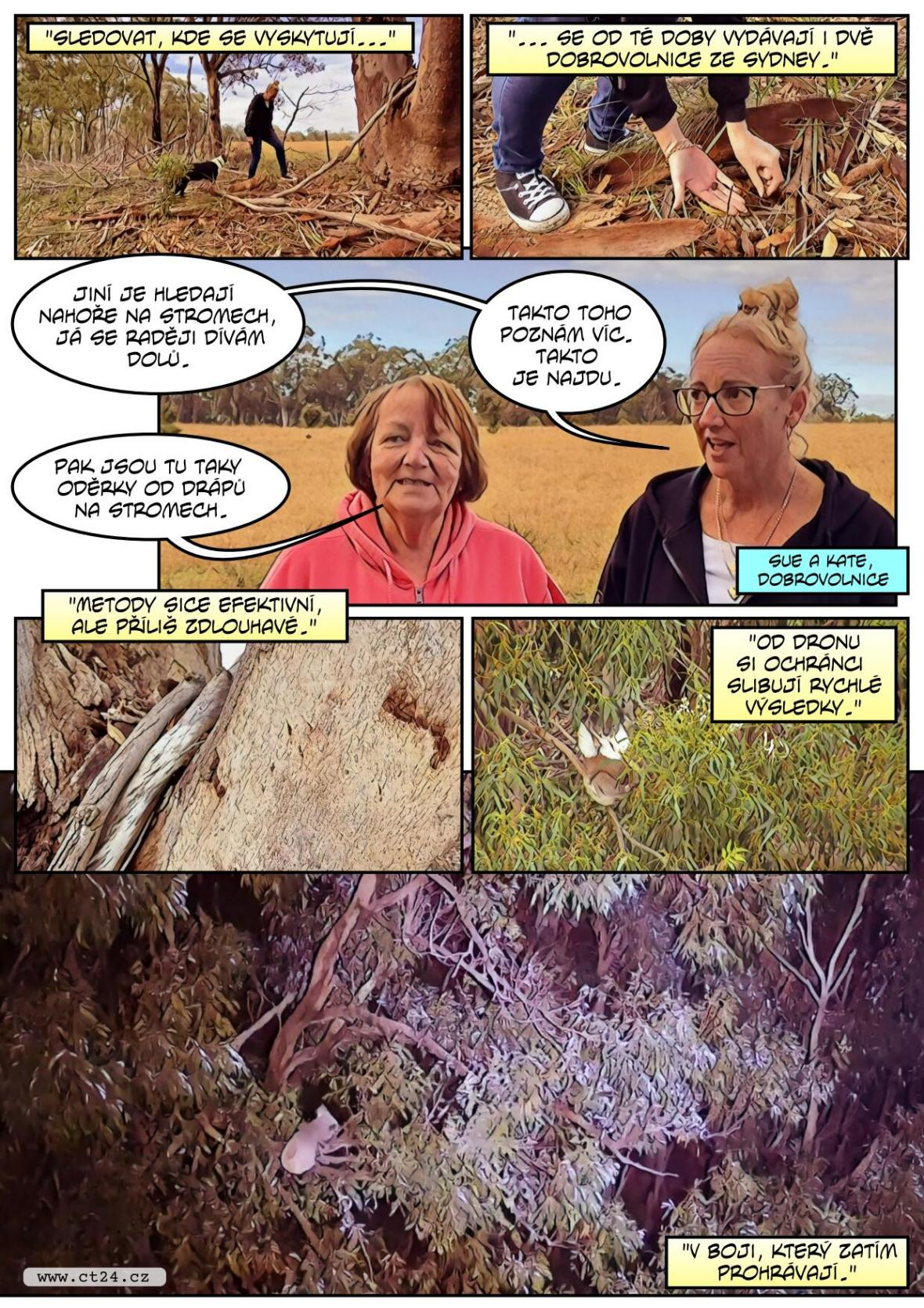 V Austrálii pomáhají se záchranou vymírající populace koalů drony s termovizí