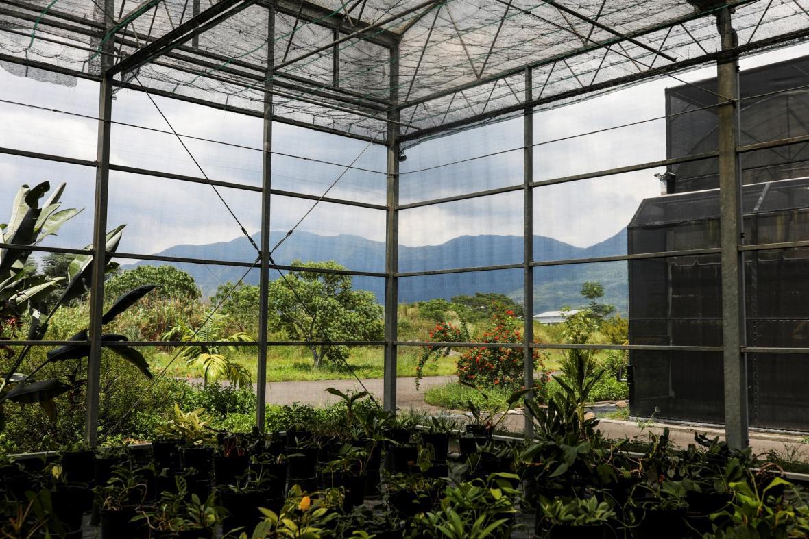 Botanici na Tchaj-wanu hledají ohrožené druhy rostlin, které by mohly zmizet v důsledku klimatických změn