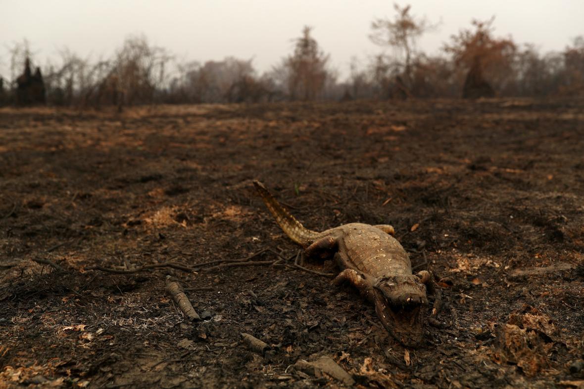 Požáry v Brazílii