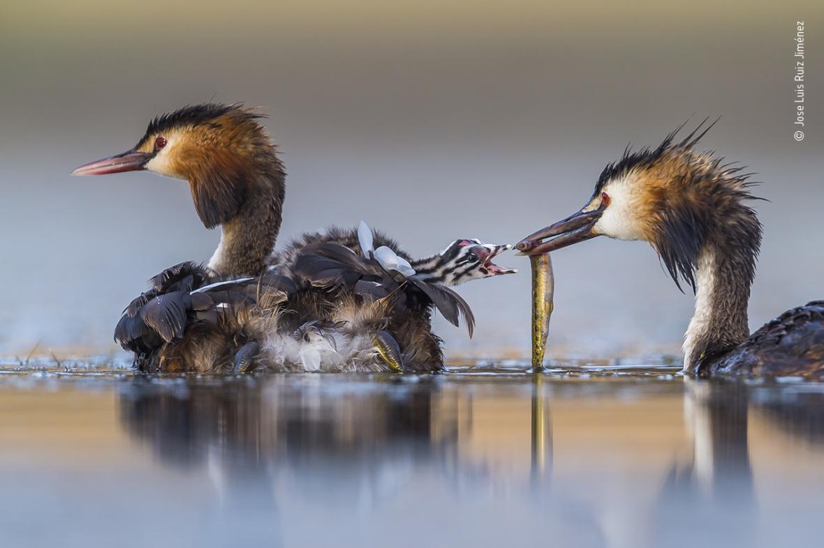 """Galerie vítězných snímků prestižní fotografické soutěže přírody """"Wildlife Photographer of the Year"""" za rok 2019"""
