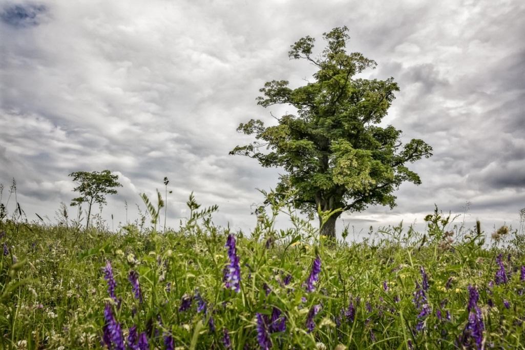 Přehled finalistů ankety Strom roku 2020