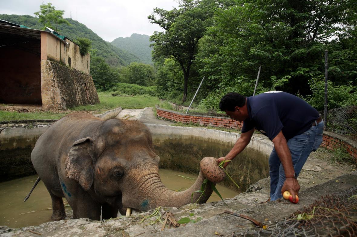 Přesun nejsmutnějšího slona světa Kaavana do nového domova v Kambodži