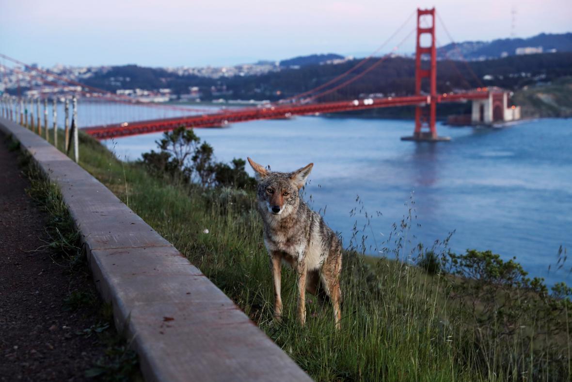 Živočišná říše na fotografiích zaznamenaných reportéry během roku 2020