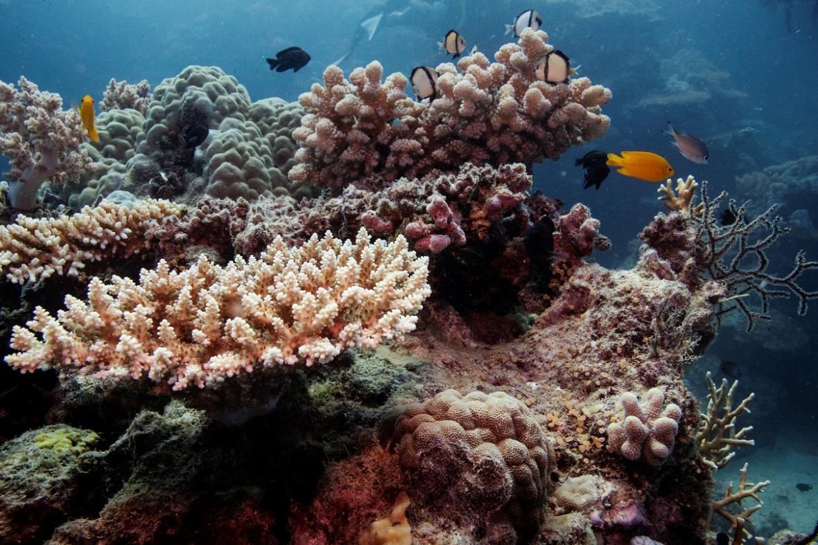 Rozdíl mezi zdravým korálem a odumřelým