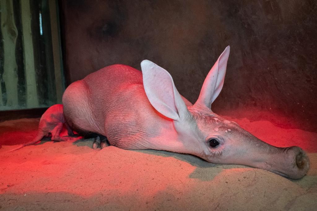 Královédvorská zoo slaví valentýnský přírůstek