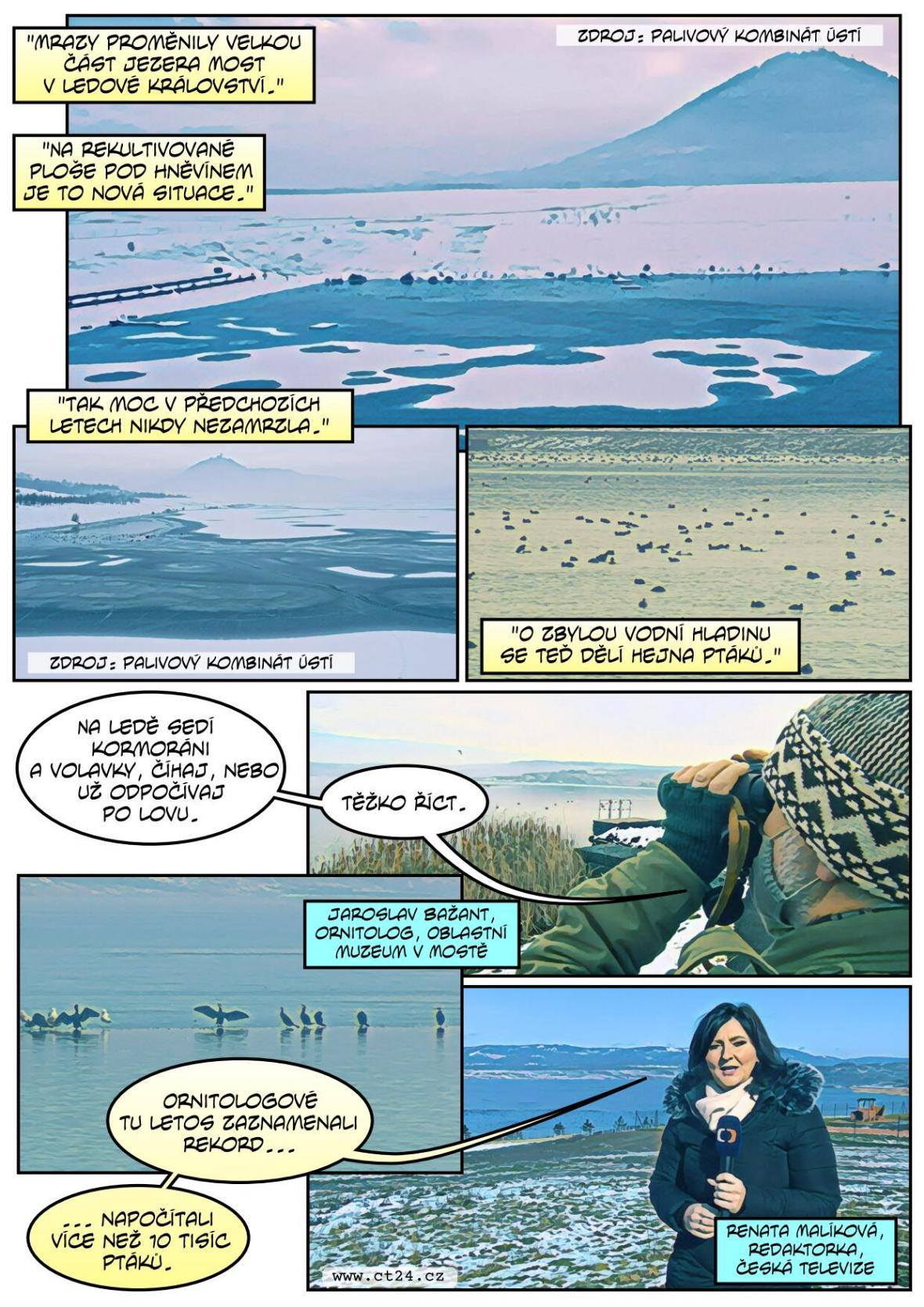 Ptáků zimujících na jezeře Most stále přibývá, letos jich ornitologové evidují přes 10 tisíc