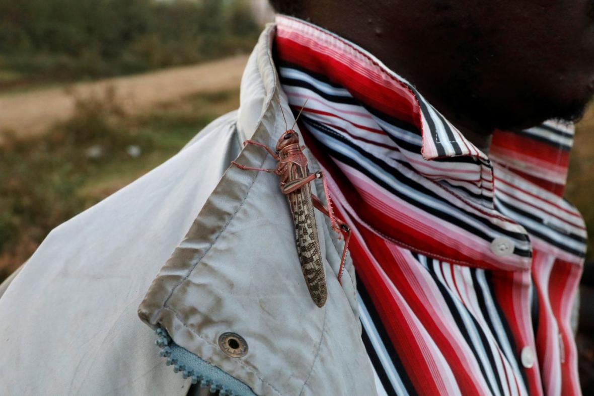Přemnožené kobylky jsou pro obyvatele Kani už tradičním nepřítelem, se kterým marně bojují každý rok