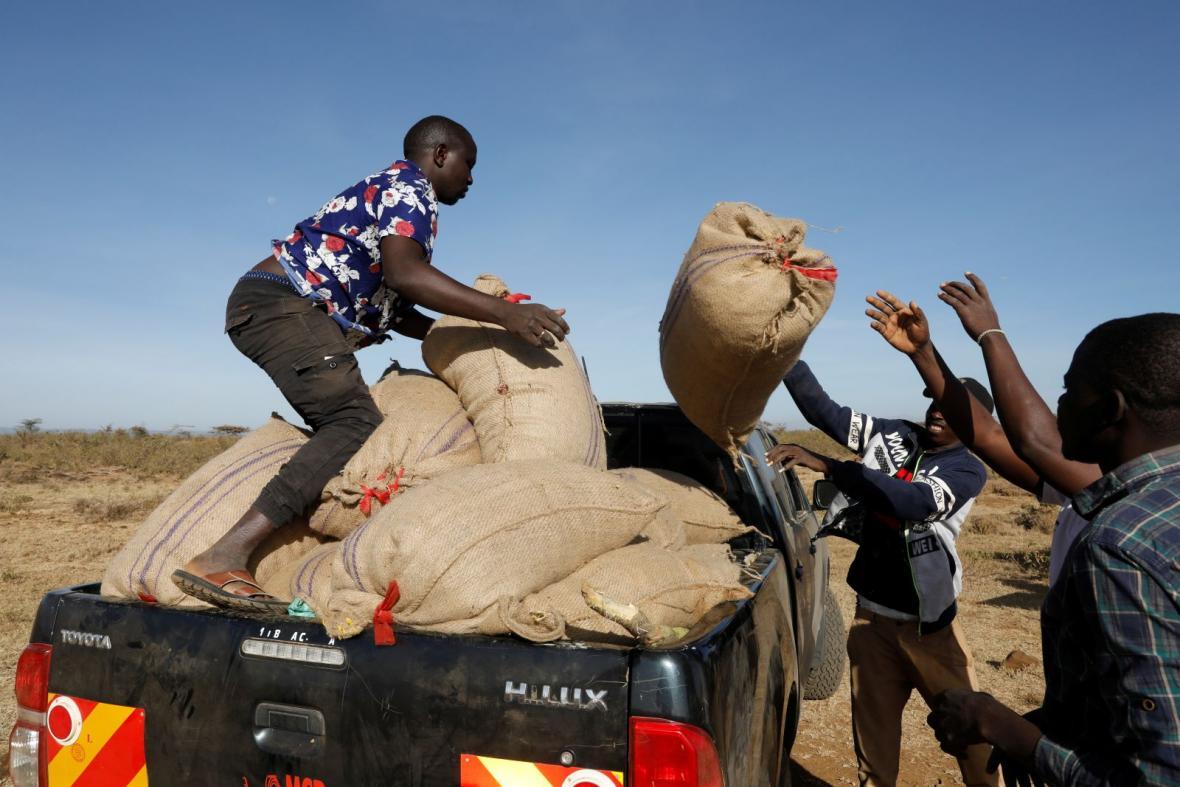 Farmářům v Keni mizí úroda před očima. Mračna kobylek pohltí skoro vše