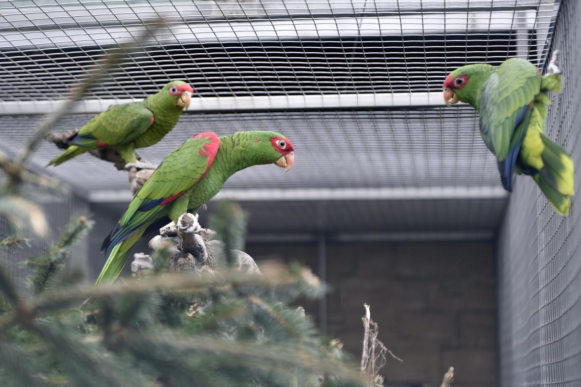 Papouščí zoo v Bošovicích