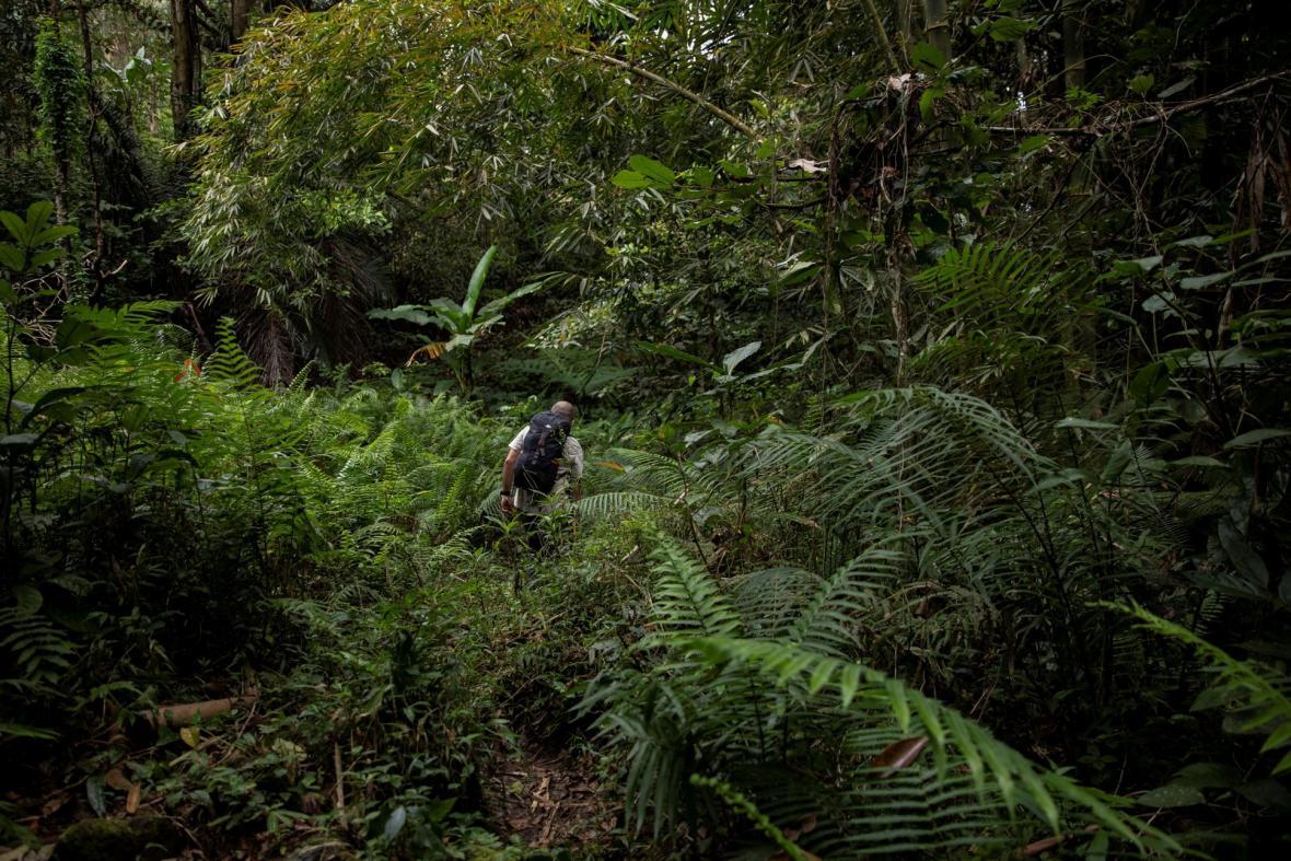 Vědci zkoumají netopýry v okolí laguny u města Los Baños na Filipínách