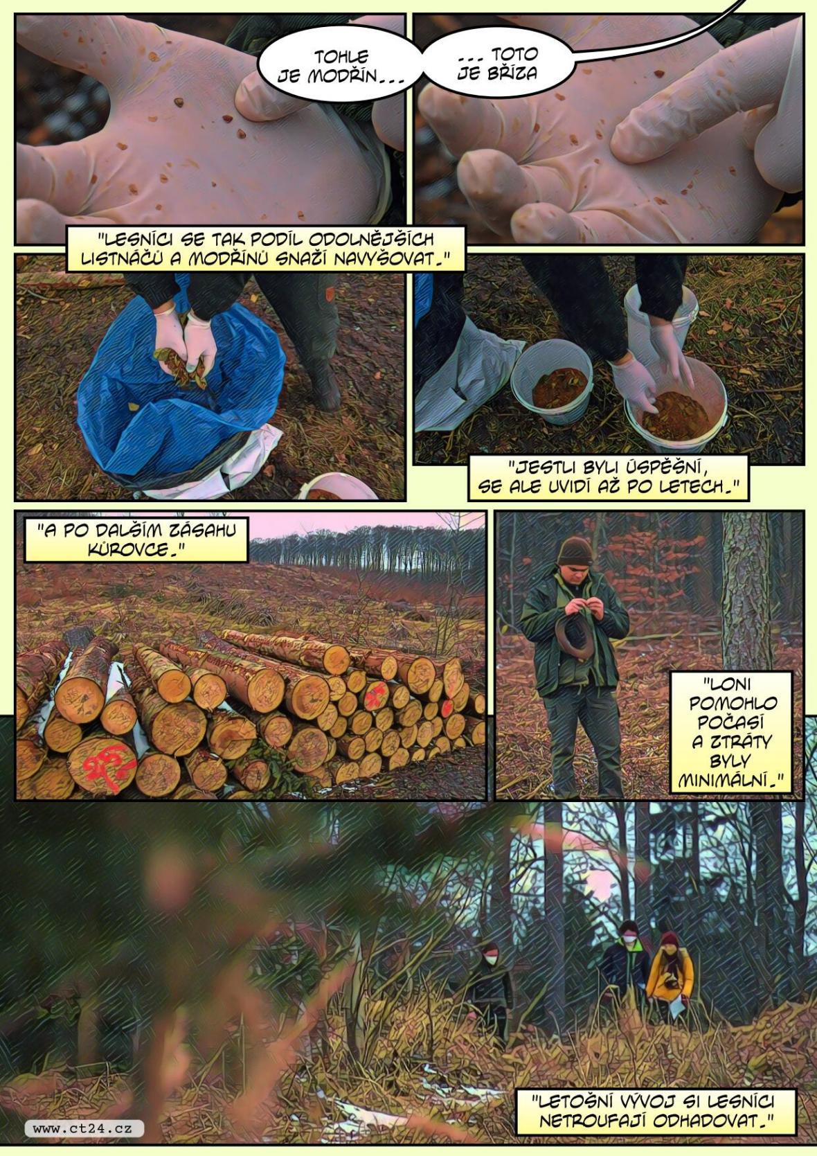 Odolné stromy by mohly vytlačit kůrovce