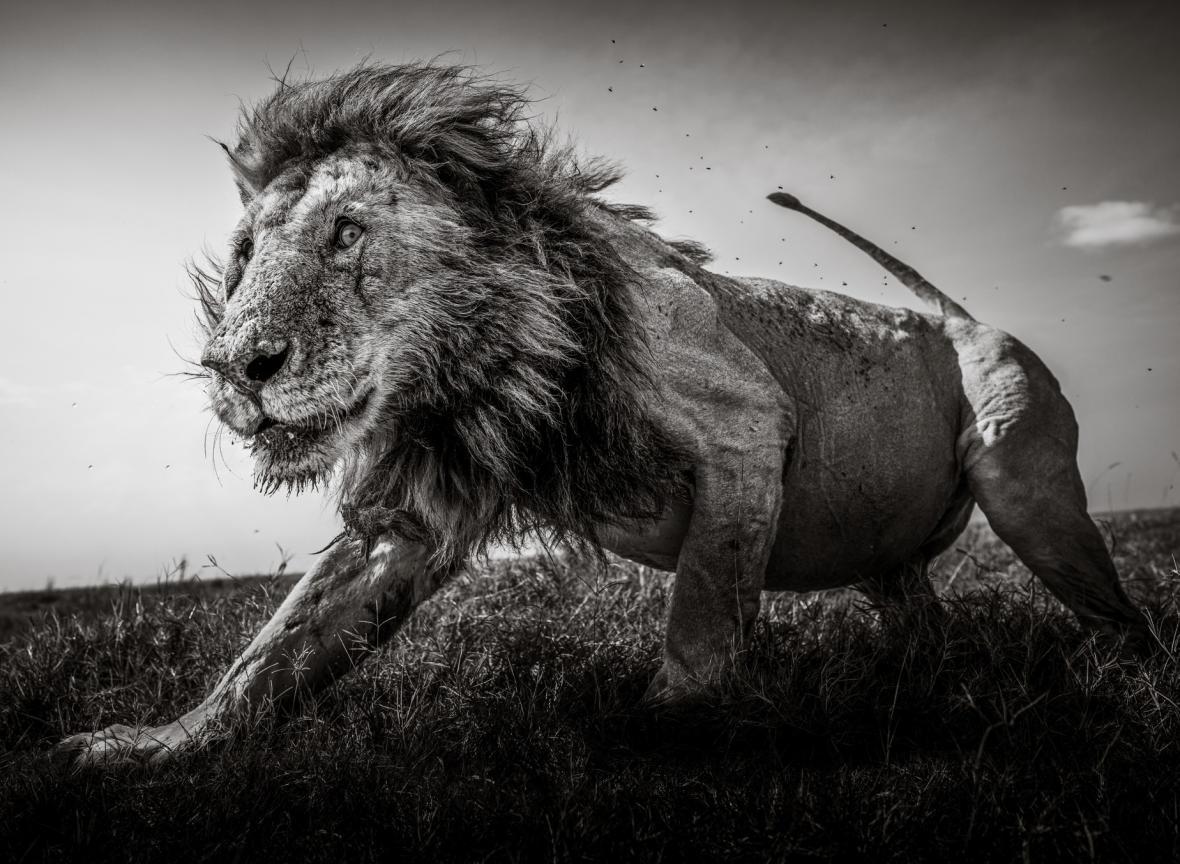 Fotografie nominované v soutěži Sony World Photography Awards 2021