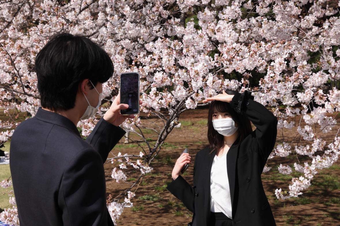 Kvetoucí sakury v březnu 2021 v Japonsku