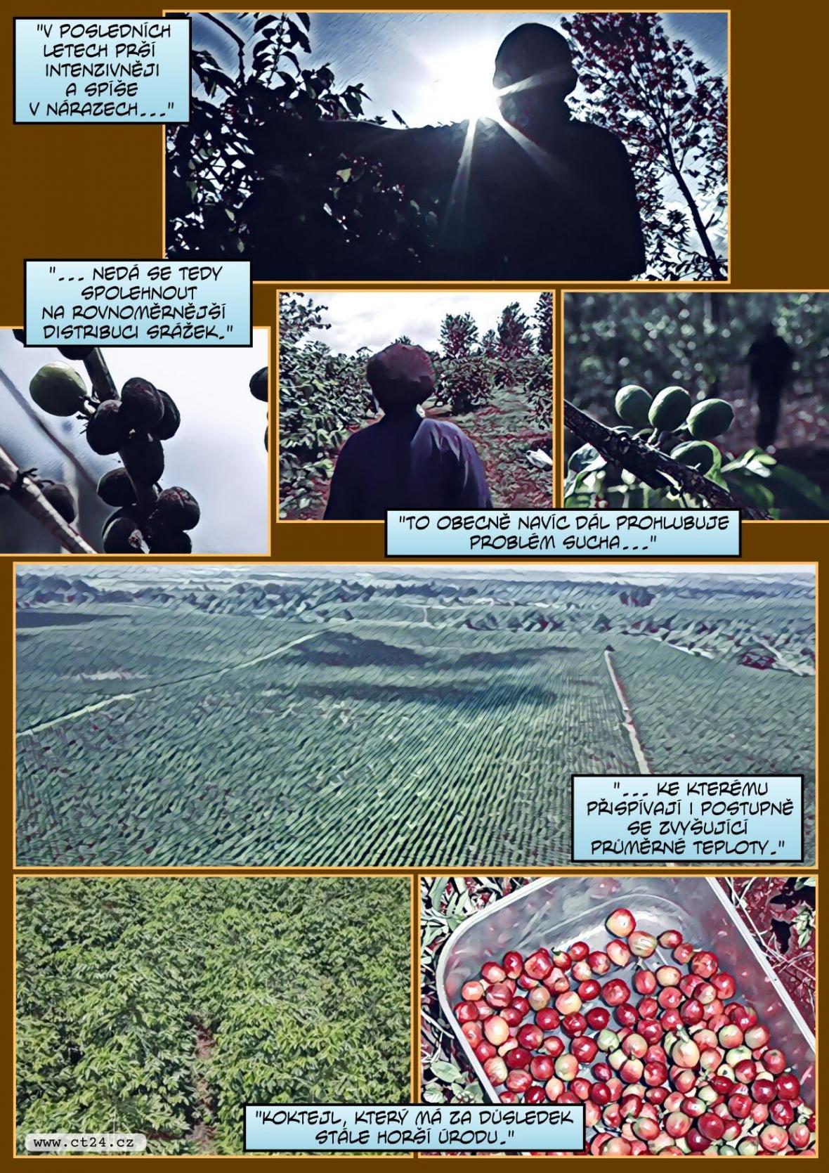 Pandemie a klimatické změny mají dopady na pěstování kávy