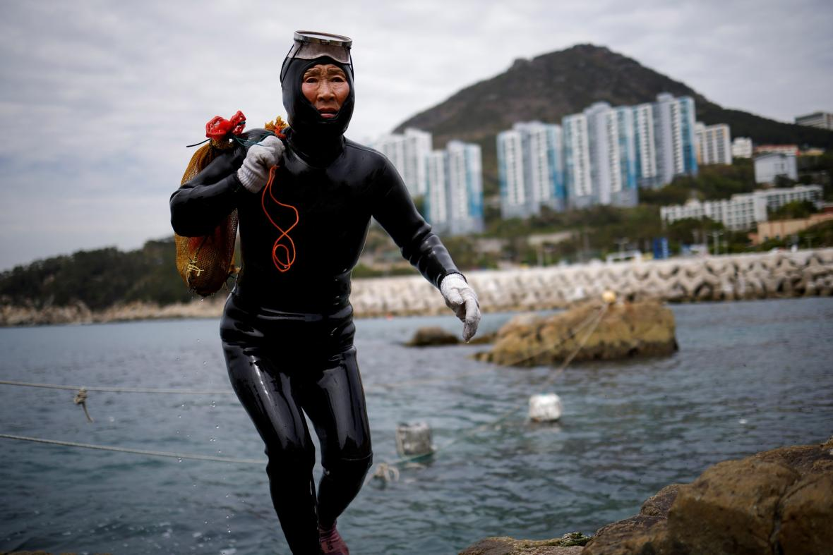Nejstarší potápěčky světa pociťují důsledky klimatických změn. Rychlé oteplování moře v oblasti jihokorejské provincie Čedžu má za následek snižování počtu mořských živočichů