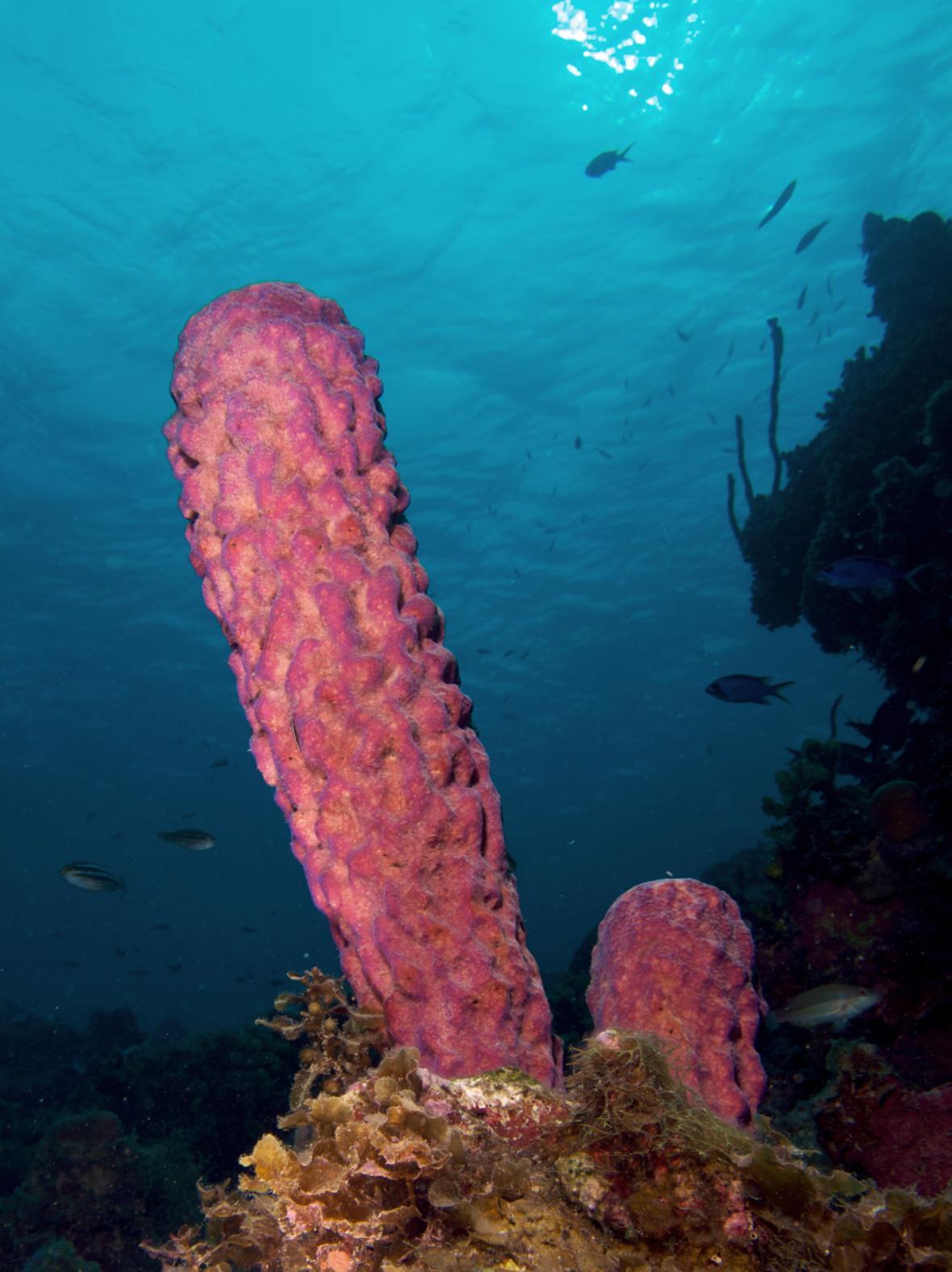 Různé druhy mořských hub