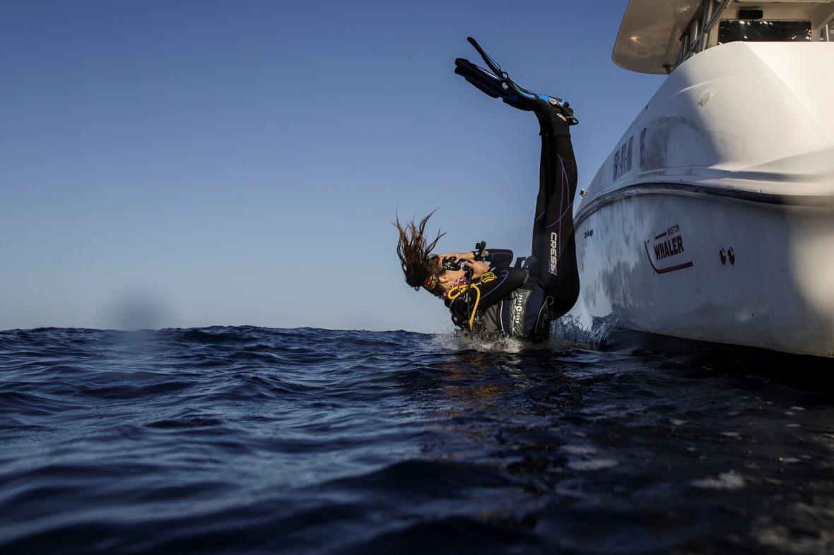 Vědci se zaměřili na výzkum korálových útesů v oblasti Rudého moře u města Džidda v Saúdské Arábii a ostrova Lizard, který je součástí Austrálie
