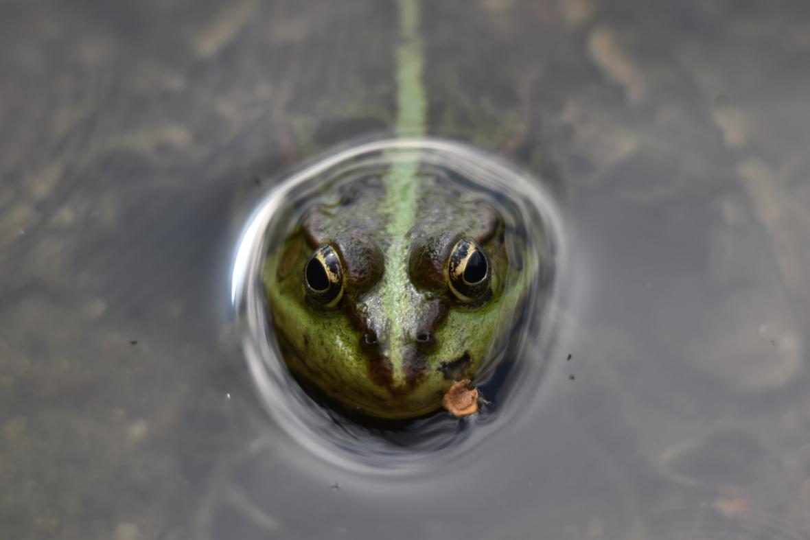 Vítězné fotografie v soutěži Czech Nature Photo 2021