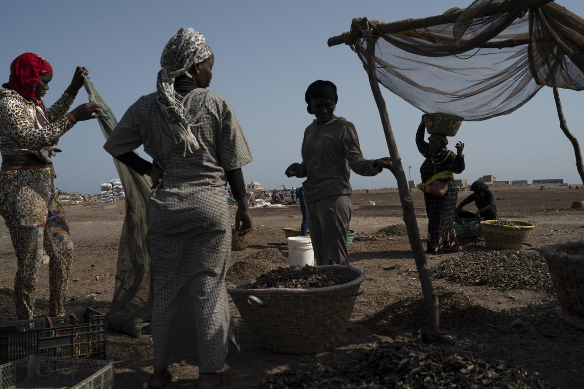 Místní obyvatelé z okolí senegalské zátoky Bargny se rybolovem živí od nepaměti. Jejich metoda lovu a zpracování úlovku se dědí z generace na generaci