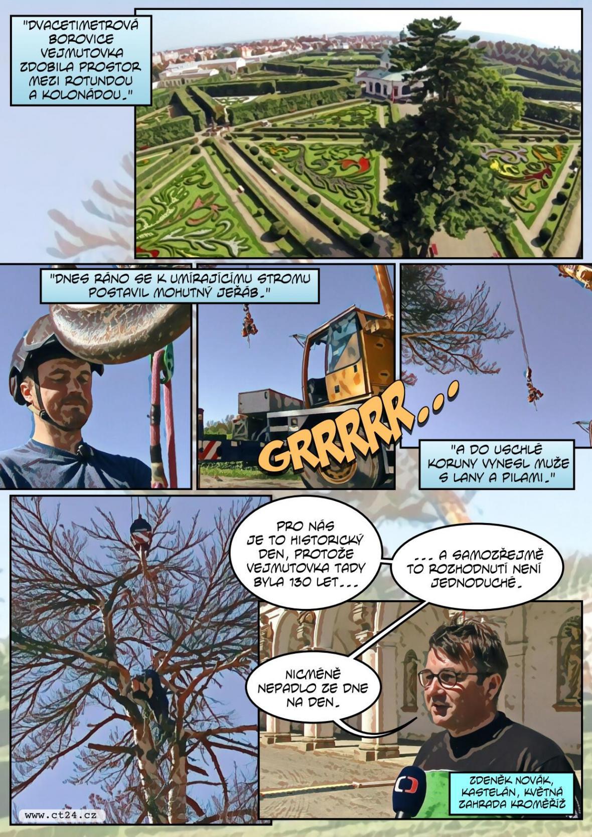 Pokáceli staletý strom v Kroměříži