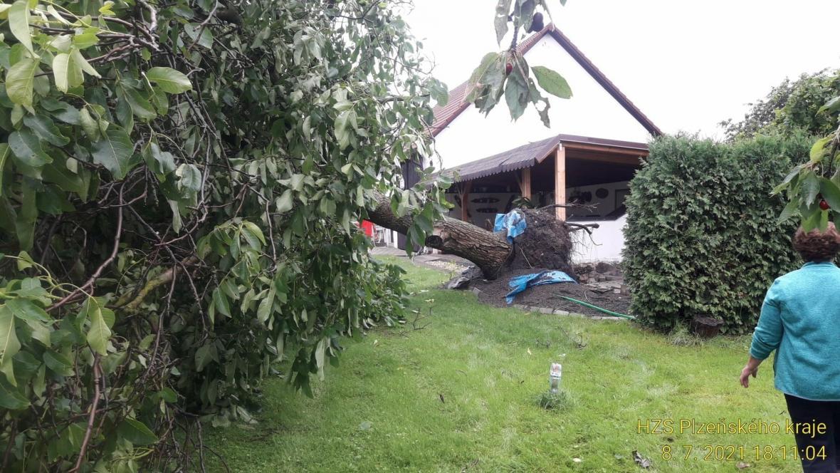 Spadlý strom na Plzeňsku