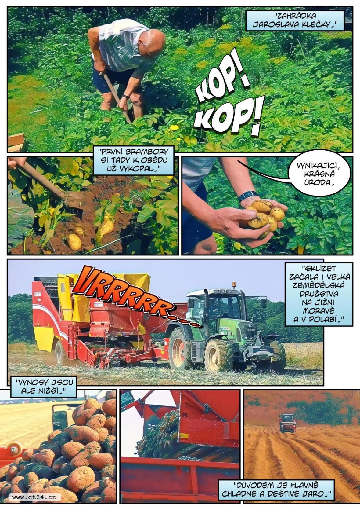 Začala sklizeň raných brambor, úroda je podprůměrná