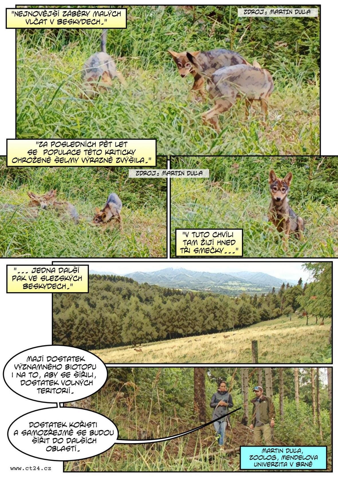 Vlkům se v Beskydech daří