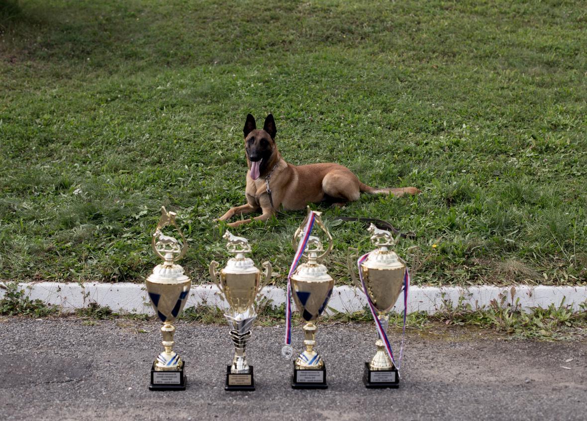 Hlavním organizátorem Policejního mistrovství České republiky psovodů se služebními psy je odbor služební kynologie a hipologie Ředitelství služby pořádkové policie ČR