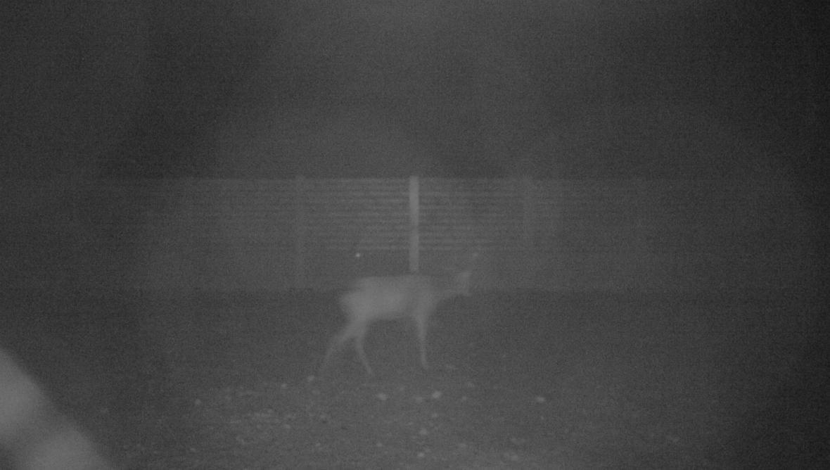 Zvířata, která zachytila fotopast na ekoduktu u Humpolce