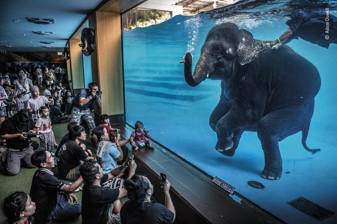Finalisté fotografické soutěže Wildlife Photographer of the year