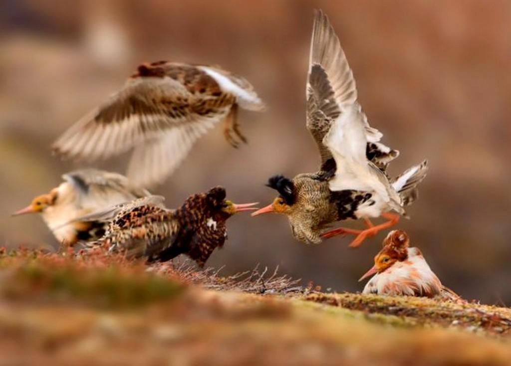 Vítězná fotografie juniorské kategorie Wildlife Photographer of the Year