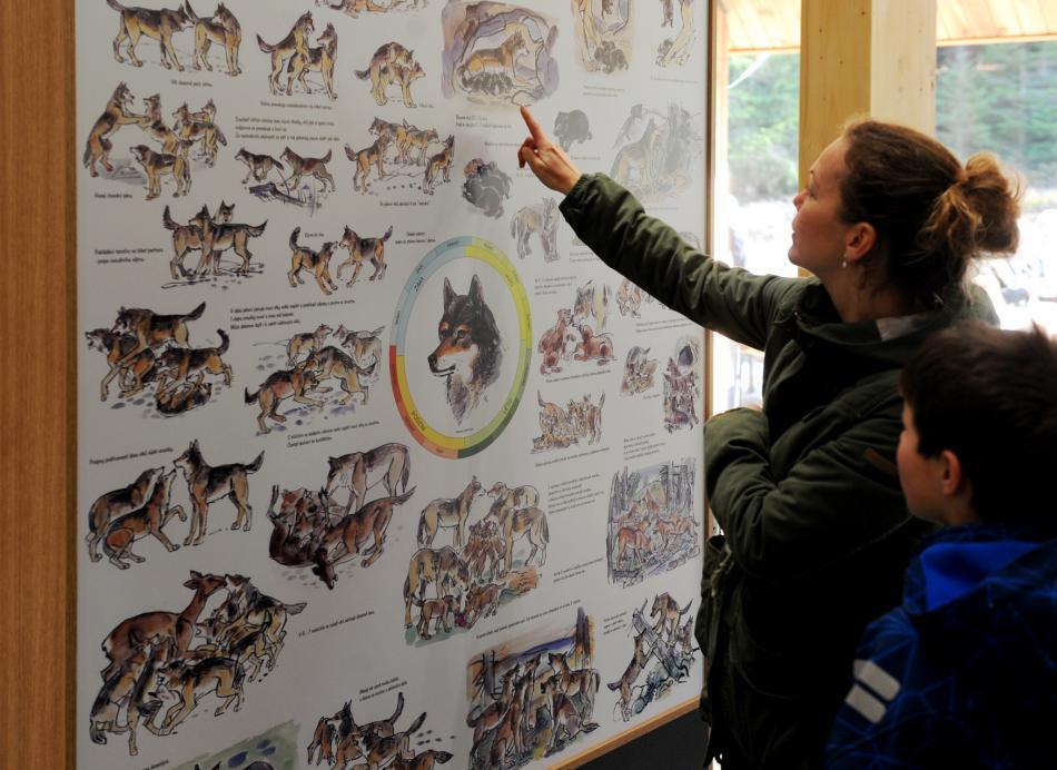 Na Šumavě otevřeli návštěvnické centrum věnované vlkům