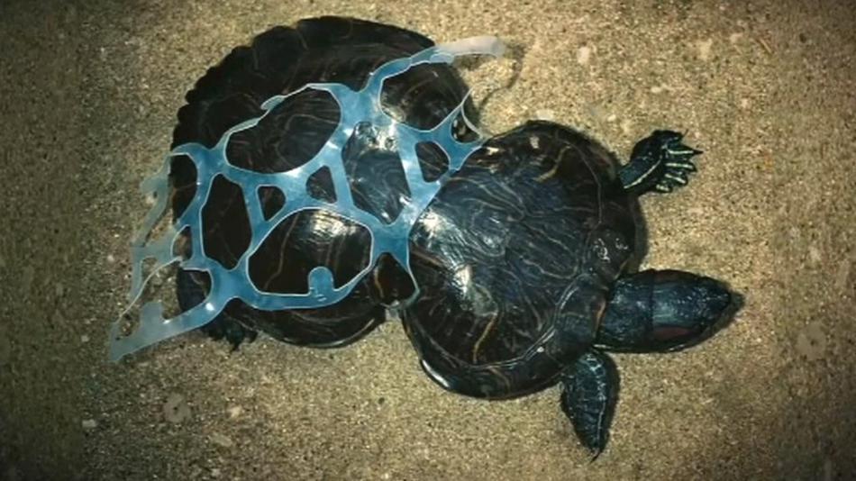 Dopady plastových odpadů na přírodu