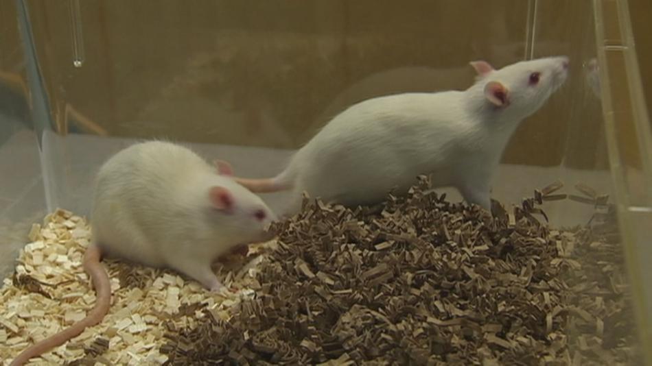 U krys živících se mrkví se rakovina rozšířila méně