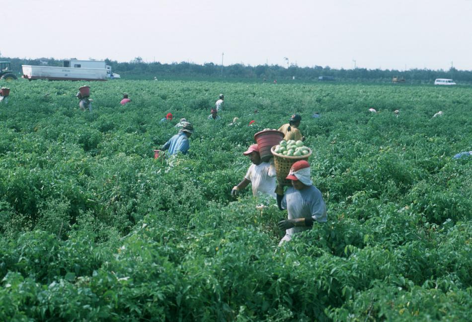 Floridská plantáž