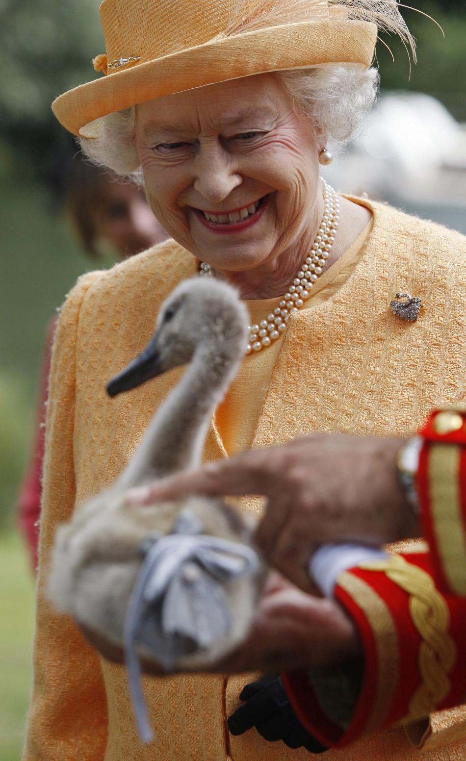 Královna Alžběta II. a labutí mládě