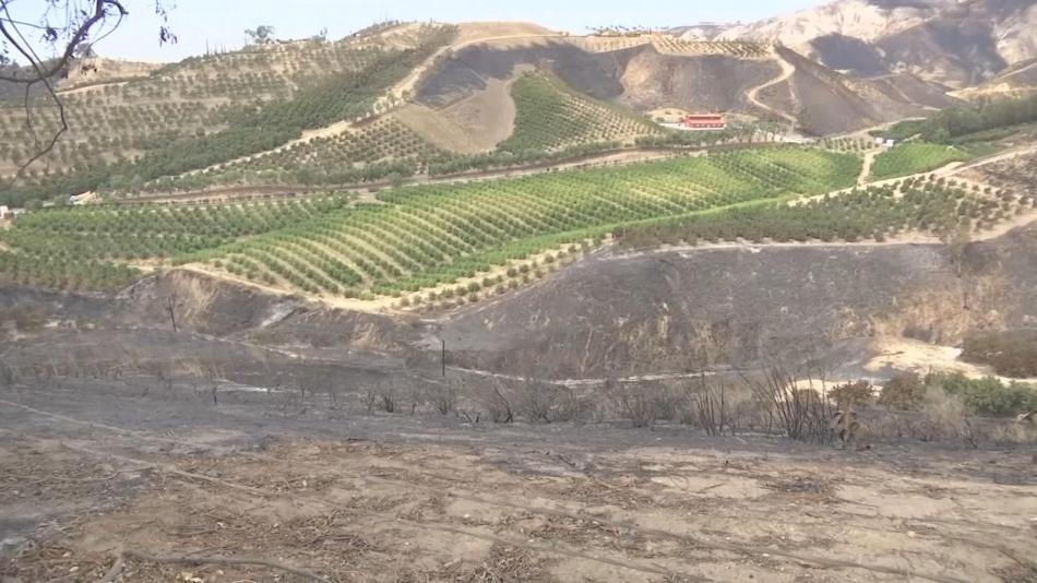Avokádová farma částěčně zničená požárem