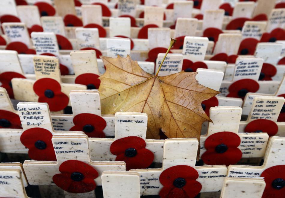 Vlčí máky na Field of Remembrance v britském Westminsteru