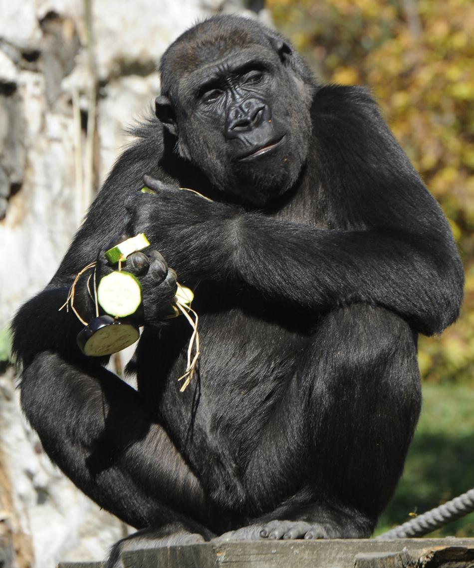Gorila Moja slaví patnácté narozeniny